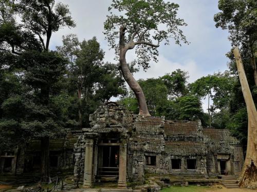 Angkor Wat (137)